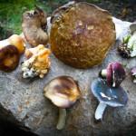 Mushroom - Fungi foraging course