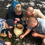 foraging courses on the seashore and along the coast, foraging for seaweed, shellfish and wild vegetables