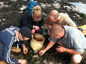 Foraging courses and walks along the coast and on the seashore