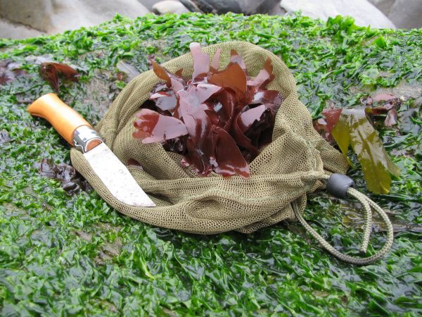 bushcraft courses on the coast foraging seaweeds