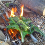 Cooking fish wrapped in wild edible greens on a drift wood fire