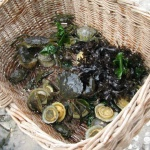 Coastal foraging on a foraging course from Coastal Survival