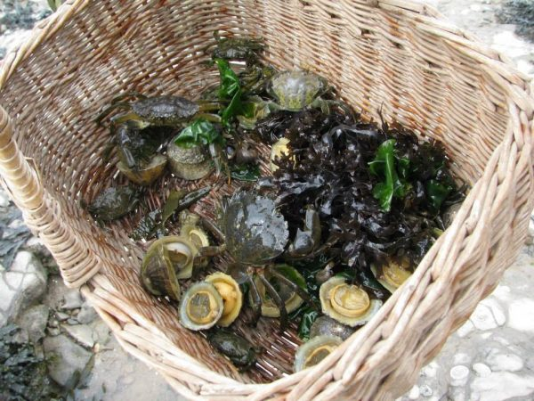 Coastal foraging on a Paleo foraging course from Coastal Survival