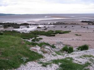 Coastal foraging along the seashore for seaweed and shellfish on a coastal foraging course