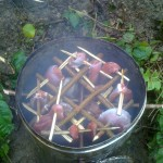 smoking game on a bushcraft course