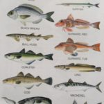 Fishing courses, beach and seashore fishing lessons