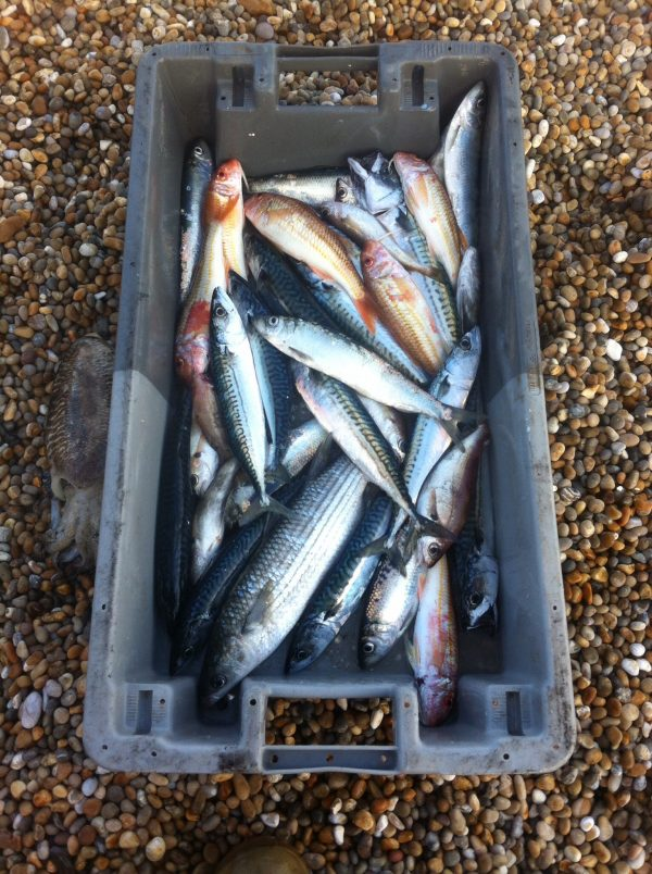Catch and cook fishing course, grilling mackerel