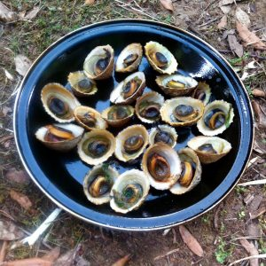 Limpets are a easy find for the coastal forager