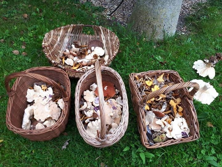Mushroom foraging and cooking course