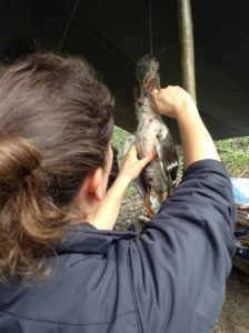 Game cookery bushcraft course