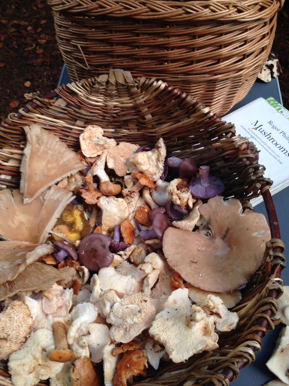 Cooking and foraging wild mushrooms in the forest ...